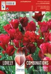 Bulbes de tulipes combi 'Shades' - x15