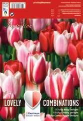 Bulbes de tulipes variés Darwin rouge rose et blanc - x15