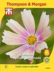 Cosmos apricot lemonade