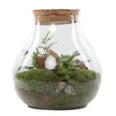 Terrarium plantes vertes, avec bouchon vieilli