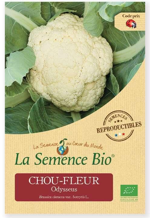 Chou Sees 300 Bio Non-OGM L/égumes Verts Herbe En Vrac Chinois Floraison Graines De Chou pour La Maison Jardin En Plein Air Cour Ferme Plantation