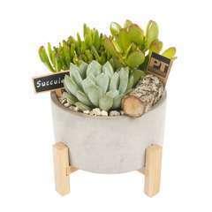 Succulentes en composition, béton, pot D22xH27cm