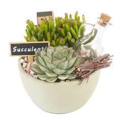 Succulentes en composition, béton, pot D15xH18cm