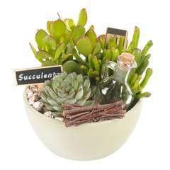 Succulentes en composition, béton, pot D18xH20cm