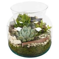 Terrarium ouvert plantes succulentes D23xH22cm