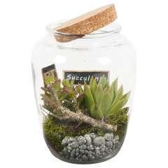 Terrarium ouvert plantes succulentes D15xH21cm