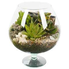 Terrarium ouvert plantes succulentes D23xH27cm