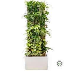 Mur Végétal POKKED | Arrosage Automatique | Modèle Casablanca Blanc