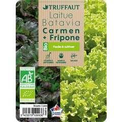 Laitue Fripone + Carmen' AB, barquette 12
