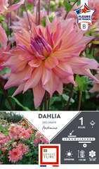Dahlia Deco Pashmina Fdf I X1