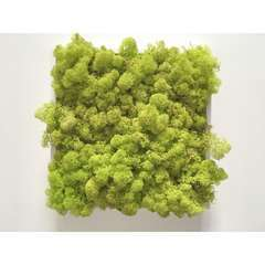 Tableau végétal stabilisé lichen petit