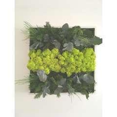 Tableau végétal stabilisé chii 35*35 cm