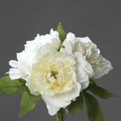 Bouquet de 3 Pivoines Creme epanouies