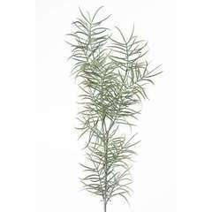 Branche d'asparagus artificiel H 70 c