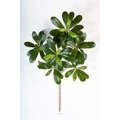 Branche de Pittisporum artificiel H 40 cm