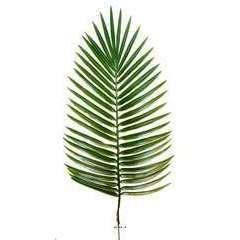 Feuille de palmier Phoenix X12 H 63 cm Plast