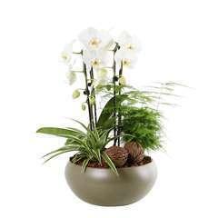 Compo orchidée cascade