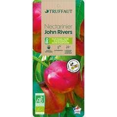 Nectarine John Rivers' Bio, gobelet 2 ans