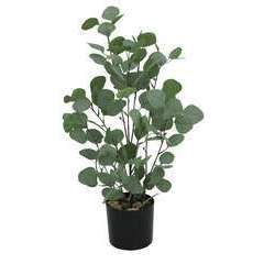 Eucalyptus artificiel vert effet blanchi en pot vert - 60cm
