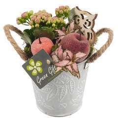 Compo pot zinc : 7 plantes vertes et fleuries. D12x H20cm