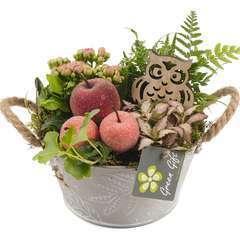 Compo pot zinc : 7 plantes vertes et fleuries. D18x H20cm