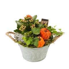 Compo pot zinc Automne : plantes vertes et fleuries. D15x H20cm