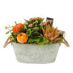 Compo pot zinc Automne : plantes vertes et fleuries. D23x H22cm