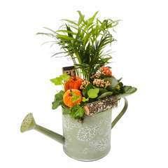 Compo pot zinc Automne : plantes vertes et fleuries. D13x H35cm