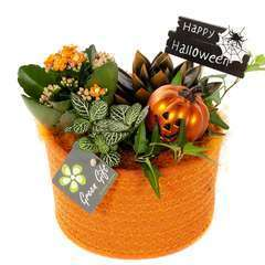 Compo Halloween : vannerie D19cm