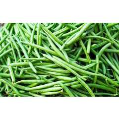 Graines de Haricot Vert nain Tonivert  - Lot de 50