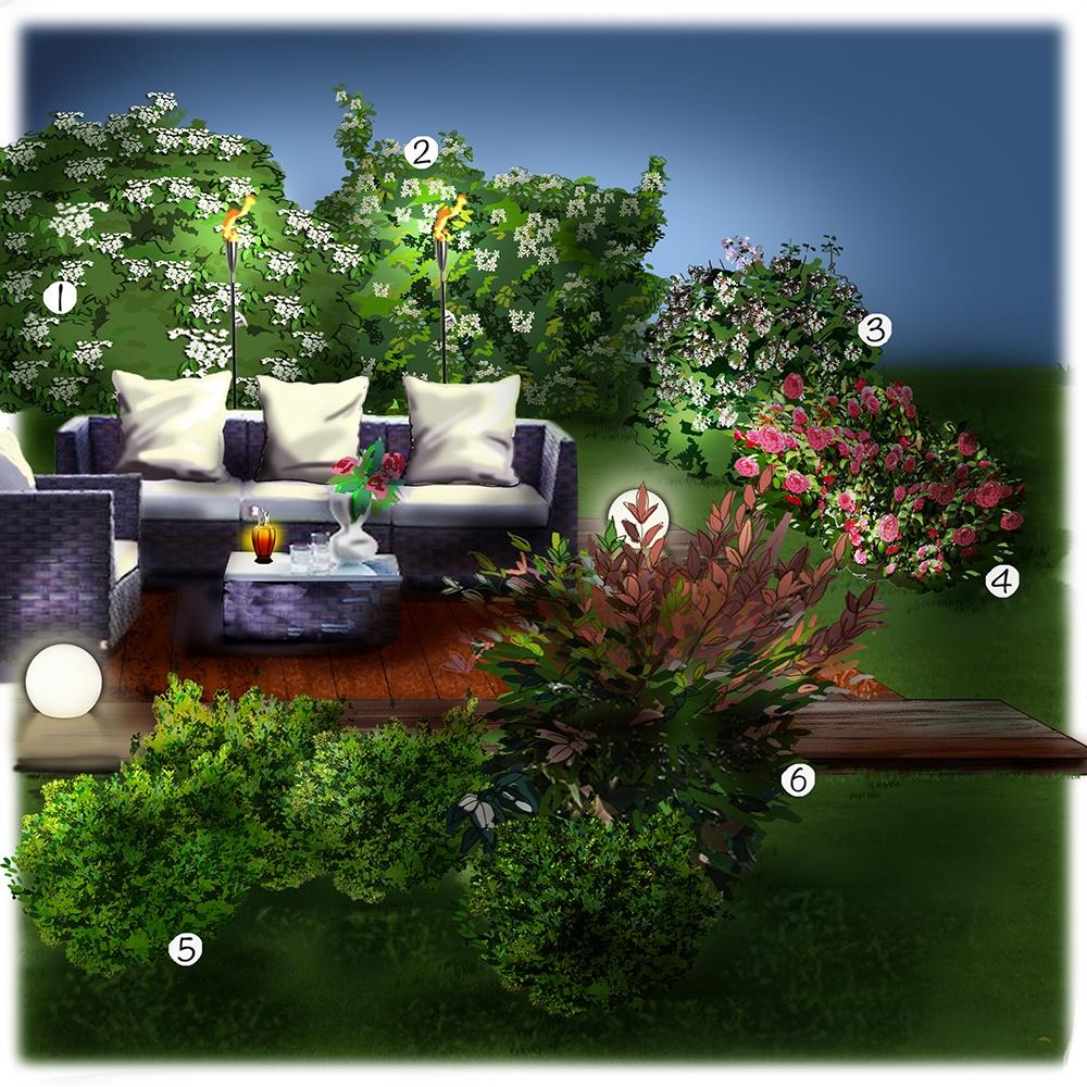 Les arbustes de la terrasse