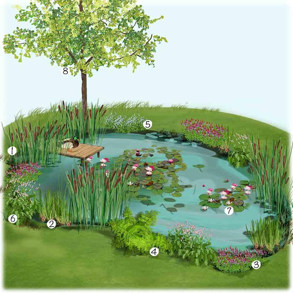 Installer un bassin naturel au jardin