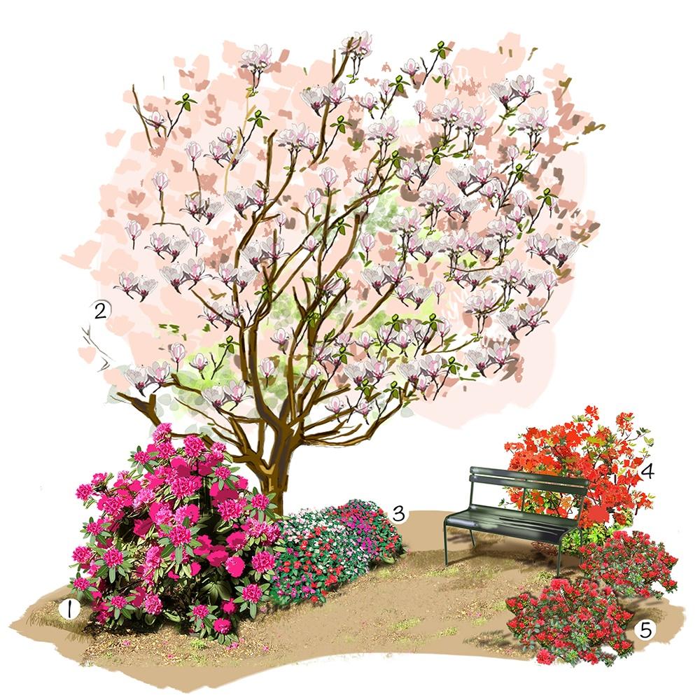 Collection d'azalées et rhododendrons au jardin
