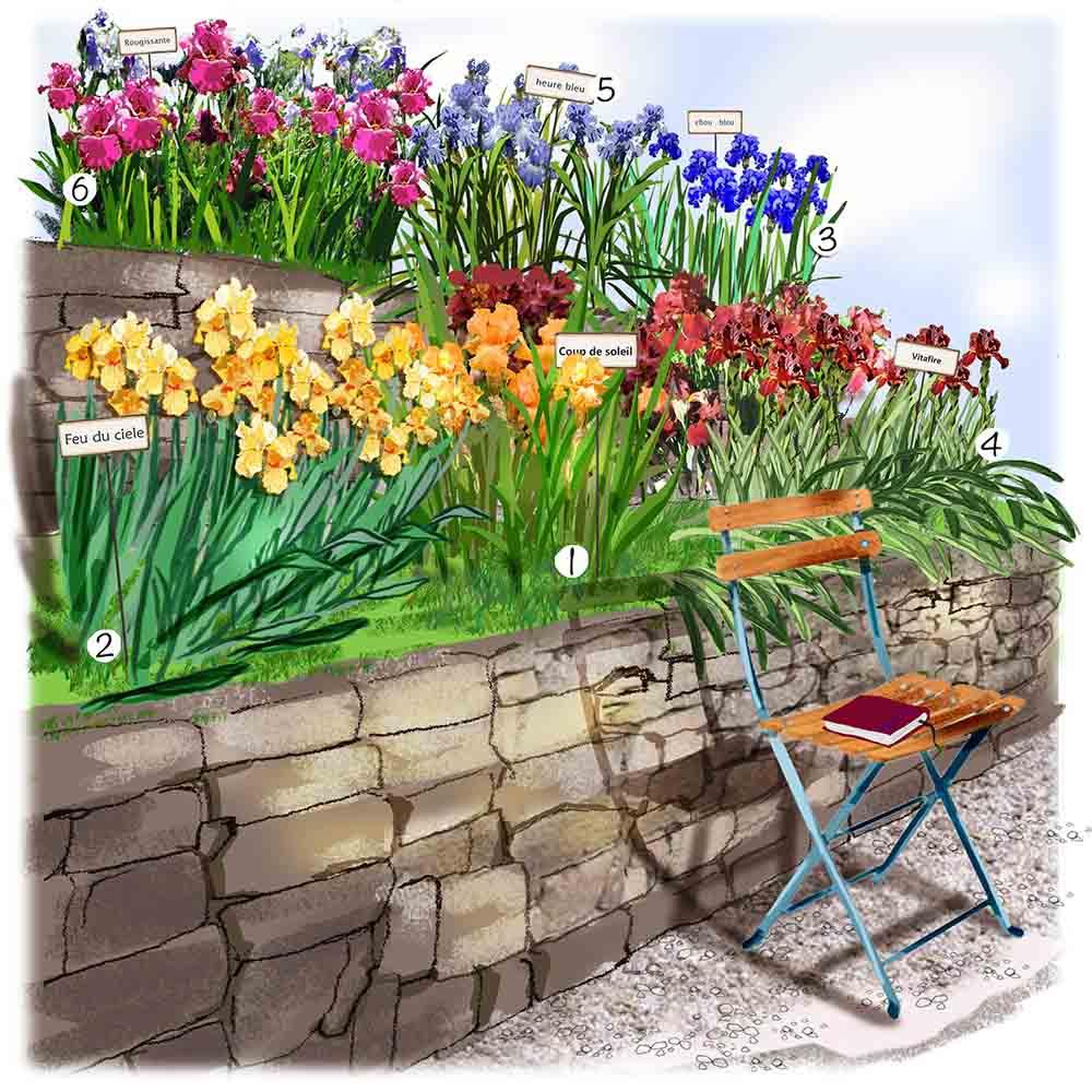 Collection d'iris au jardin