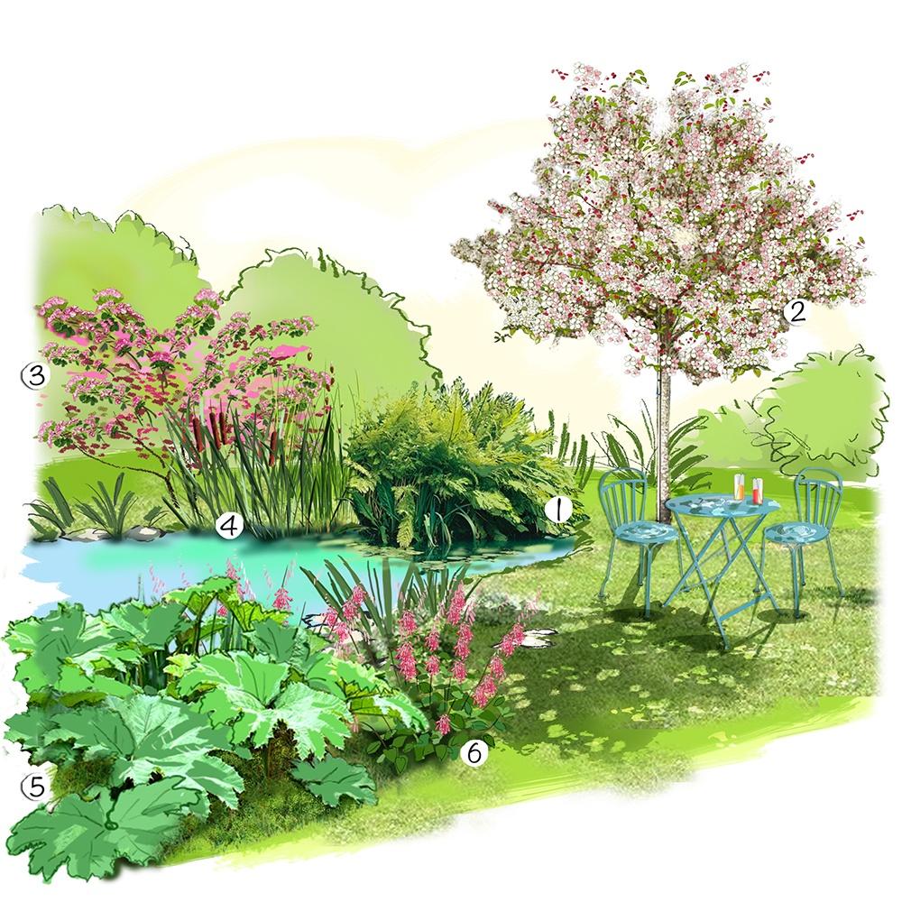 Plantes autour d'un bassin