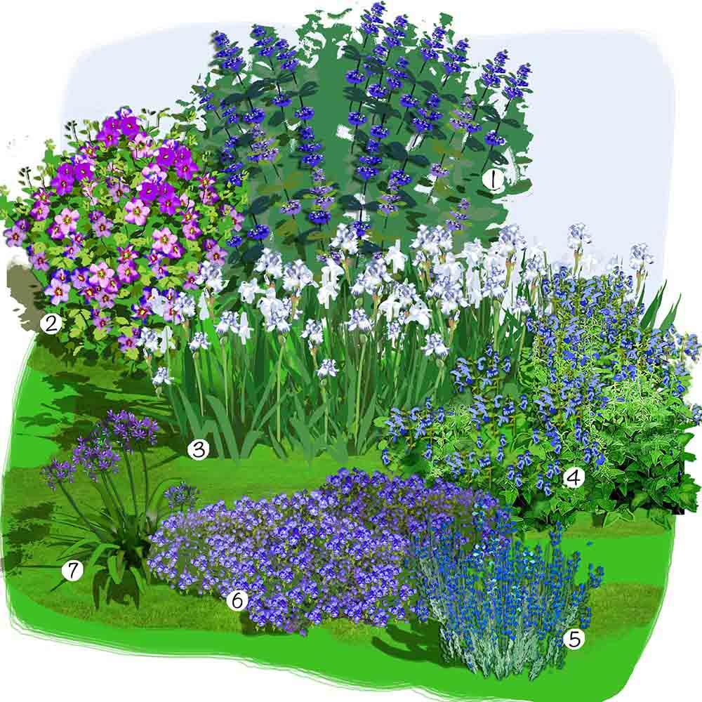 Jardin bleu, blanc et pourpre
