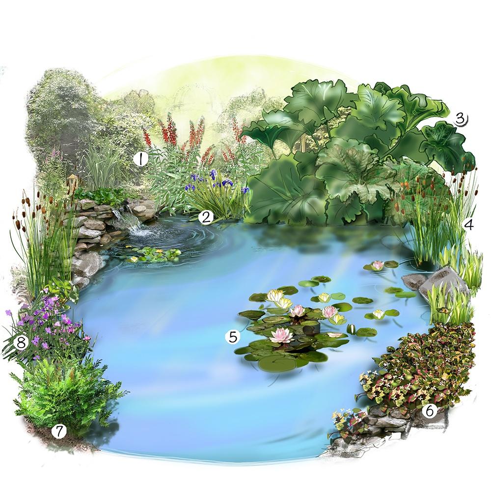 Aménager un jardin d'eau