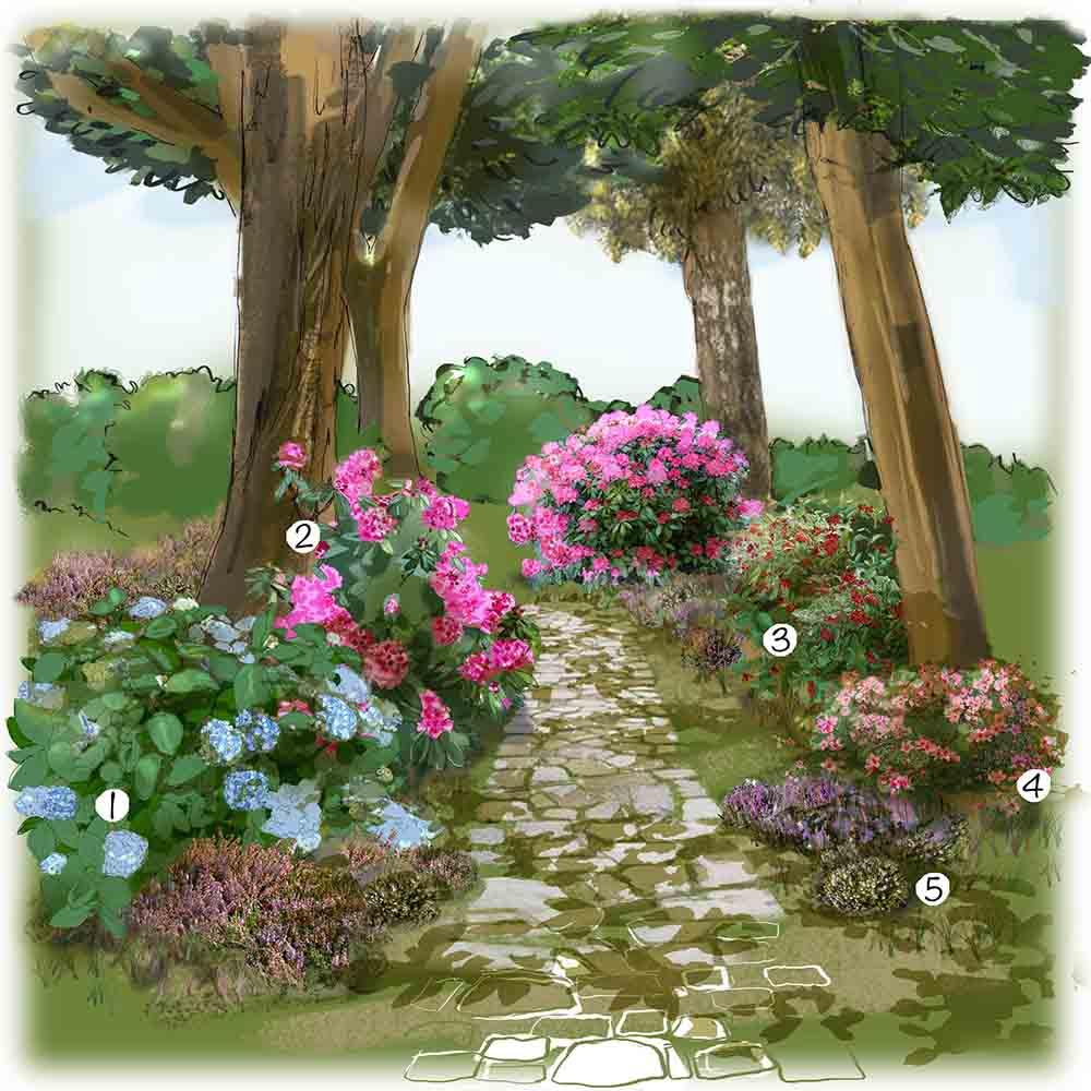Aménagement jardin d'ombre