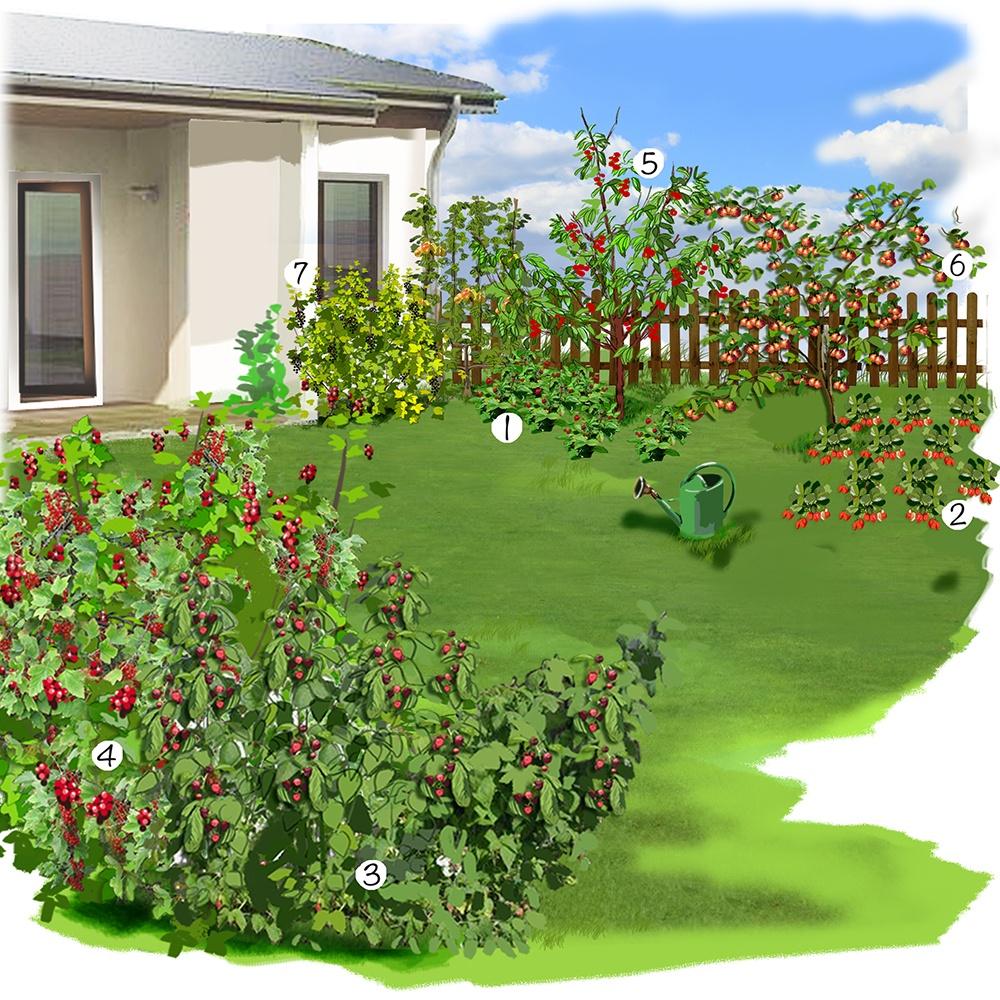 Petit jardin et ses fruits
