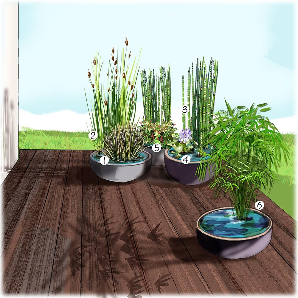 Pots aquatiques sur terrasse