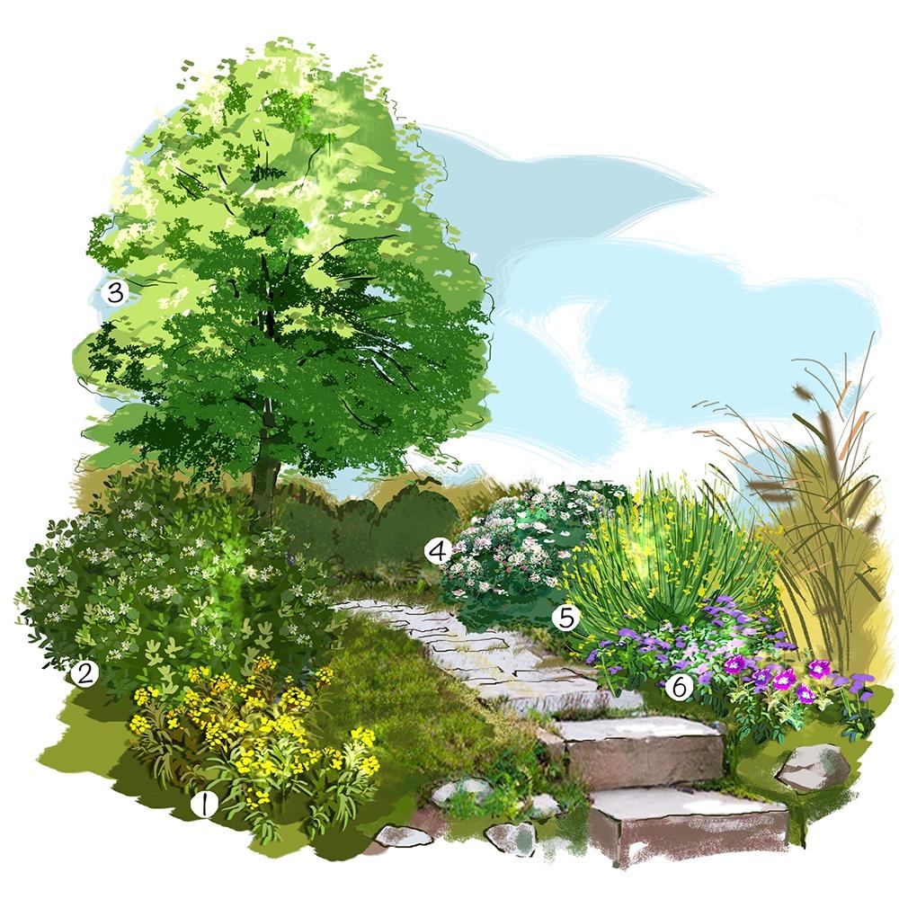 Promenade parfumée au jardin