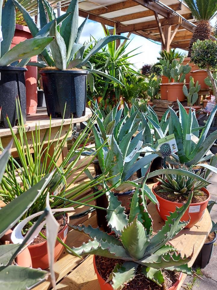S'occuper de ses plantes en été