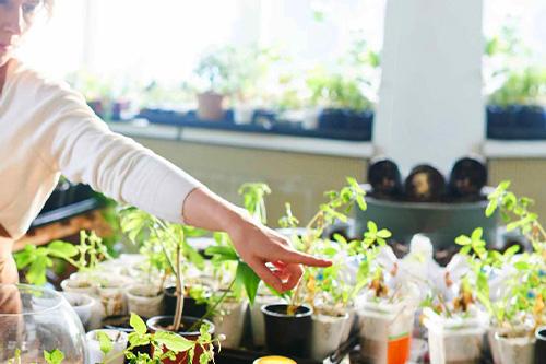 Le troc aux plantes