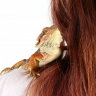 Nouveauté : les reptiles sont arrivés !