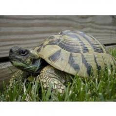 Tortues de jardin et tortues terrestres chez Truffaut Saint Maximin
