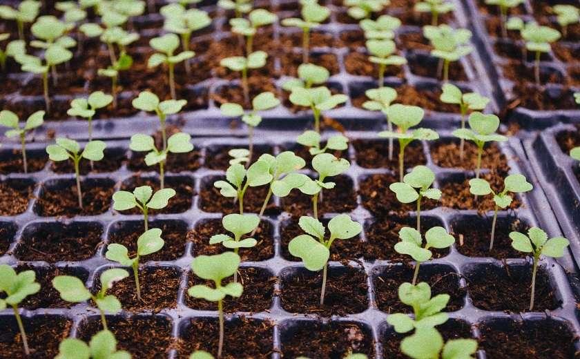 fabriquer serre à semis