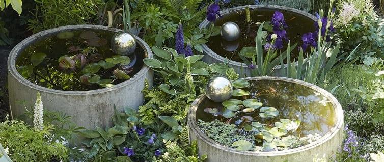 petit jardin aquatique