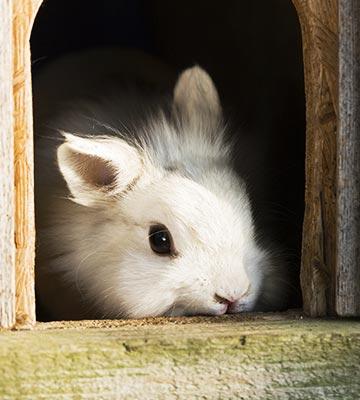 Abris pour lapin