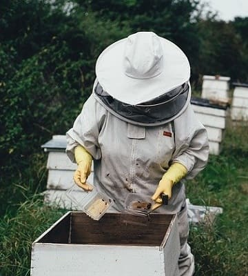 apiculteur ruche