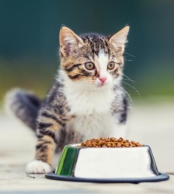 Nourrir son chat sans croquettes